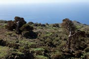El Hierro - west - inlands - El Sabinar