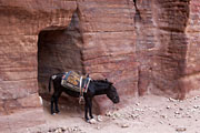 Petra - The Outer Siq