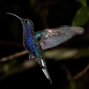 Costa Rica - Hummingbirds